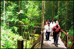 Take a leisure walk and get maximum connection with nature and jungle along the 900m Belian wooden walkway.